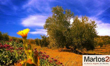 Detectado en Madrid el primer caso de Xylella en olivar