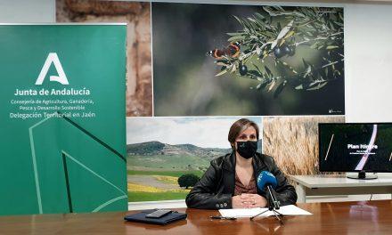Agricultura invierte 13 millones de euros en la mejora de 40 caminos rurales de Jaén